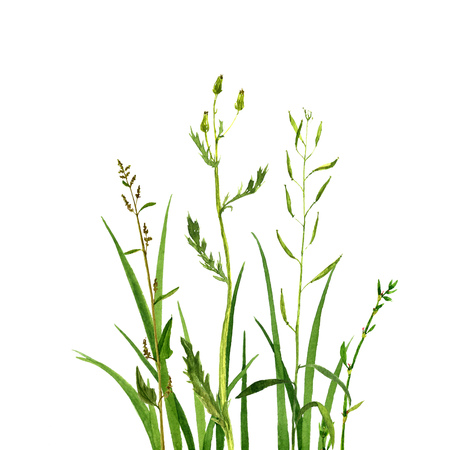 Watercolor drawing green grass, decorative herbal border, cereal wild plants, floral background, hand drawn natural template
