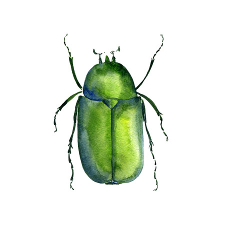 watercolor drawing chafer, green bug, hand drawn insect, beetle