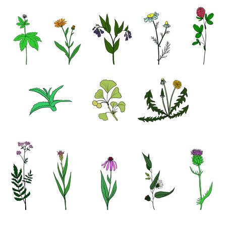 alternative medicine: vector set of medical plants Illustration