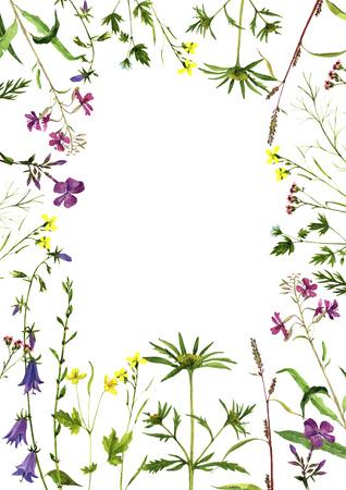 Watercolor drawing plants