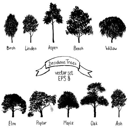 낙엽 나무의 벡터 세트