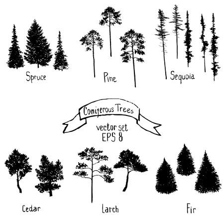 vector set of conifer trees