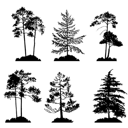vector set of conifer trees