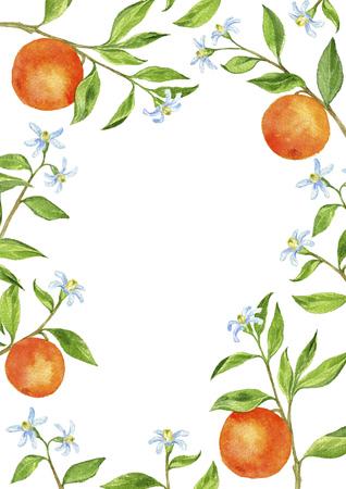 sfondo con rami di alberi da frutto, fiori, foglie e arance
