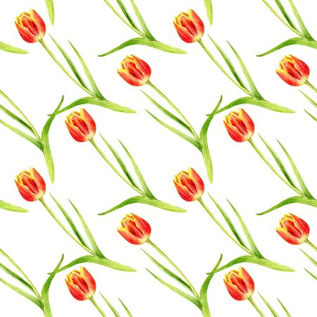 seamless pattern with watercolor red tulips