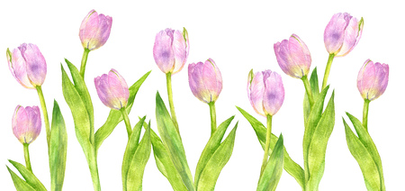 watercolor pink tulips with green leaves drawing at white paper background, painted flowers, decorative floral background, hand drawn natural template