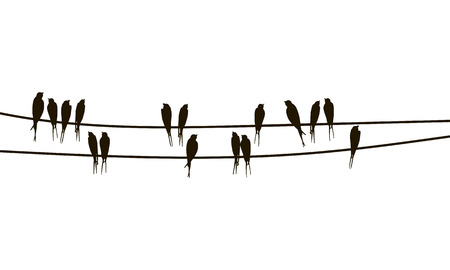 Swallows on wires, vector hand drawn silhouettes of birds