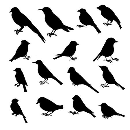 Jeu de silhouettes d'oiseaux, oiseaux chanteurs dessinés à la main, éléments vectoriels isolés vectorielles Banque d'images - 75011003