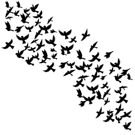 Vogel-Herde, Vektor fliegenden Vögel Silhouetten, Hand gezeichneten Singvögel Standard-Bild - 75011052