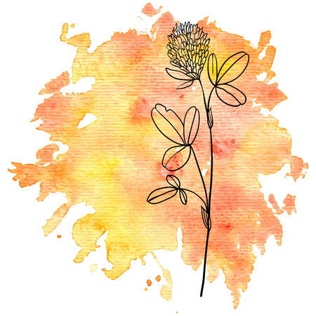 weeds: flower of clover at watercolor background