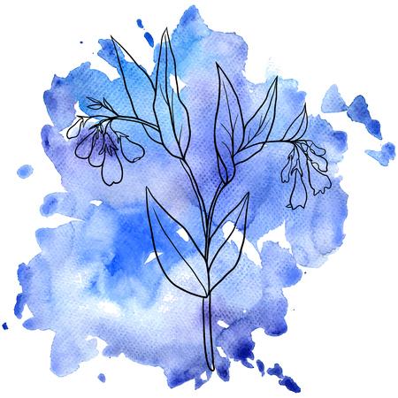 comfrey: Comfrey at watercolor background