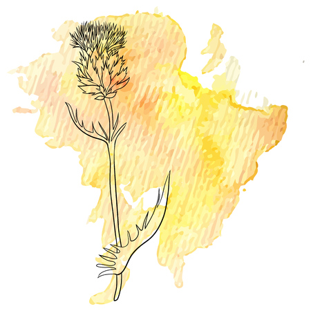 milk thistle flower at watercolor background