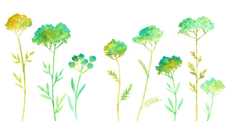 weeds: hand drawn color floral background