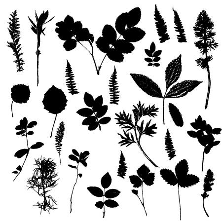 Conjunto de siluetas de plantas y hojas Foto de archivo - 79170773