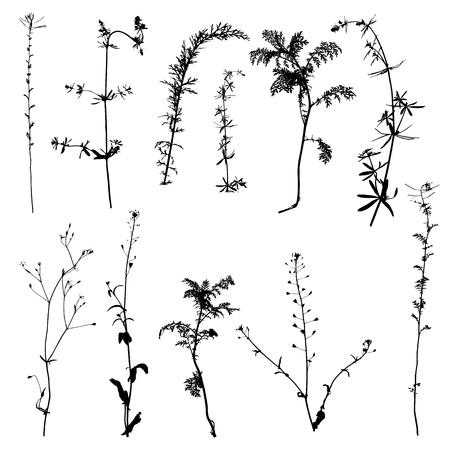 vector wild plants silhouettes