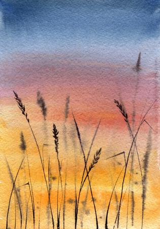 sunset sky and grass Archivio Fotografico