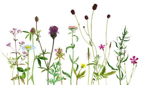 Flores de dibujo acuarela y plantas Foto de archivo - 82446183