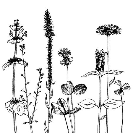 Vectorachtergrond met inkttekening wilde installaties, kruiden en bloemen, zwart-wit botanische illustratie in uitstekende stijl, bloemenmalplaatje