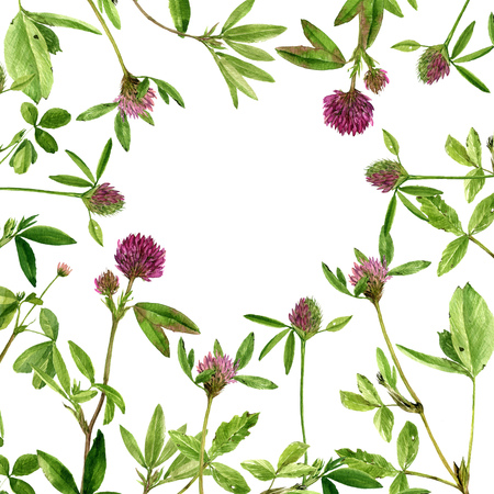 clovers: watercolor drawing clovers Stock Photo