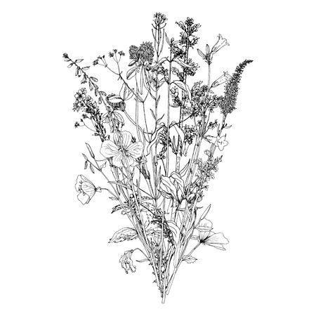 Vector bouquet with drawing wild plants, herbs and flowers, monochrome botanical illustration in vintage style, isolated floral element