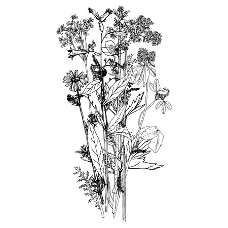 floral: Background with drawing herbs and flowers Illustration