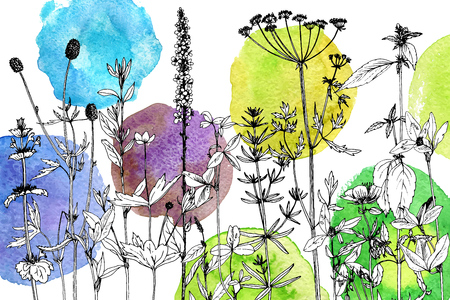 Background with drawing herbs and flowers Illustration