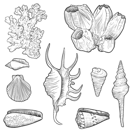 vector seashells, corals and barnacle, hand drawn illustration Vektoros illusztráció