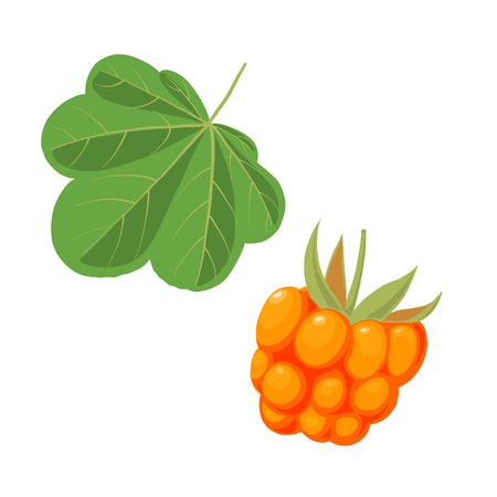 Cloudberry and leaf illustration.