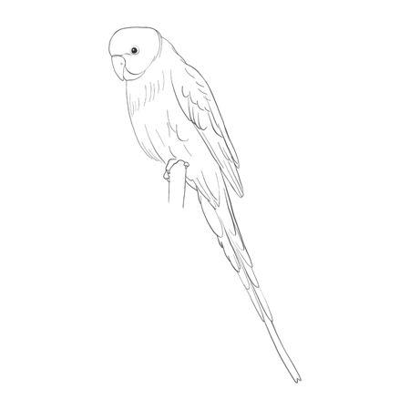 Schets van grasparkiet, papegaai die bij wit wordt geïsoleerd.