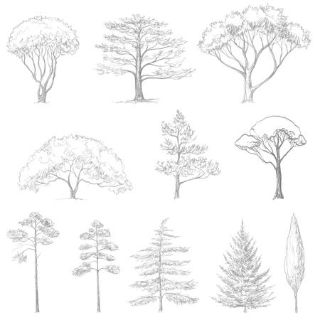 Schets van bomen hand getrokken geïsoleerde natuurlijke elementen.