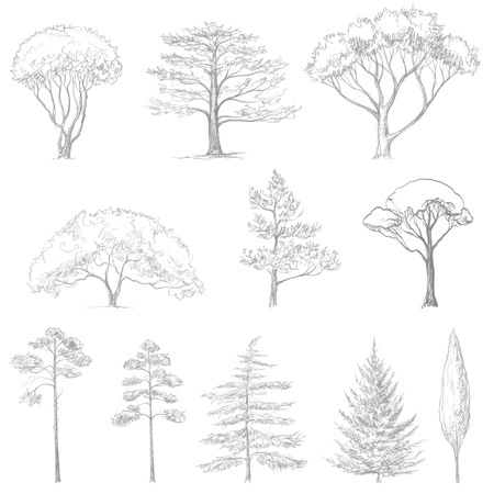 Sketch of trees hand drawn isolated natural elements. Illustration