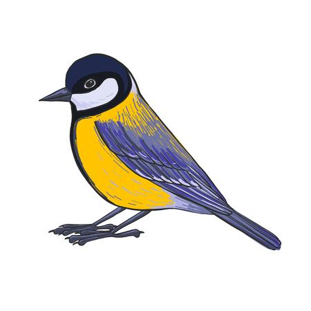 Titmouse bird illustration. Illustration