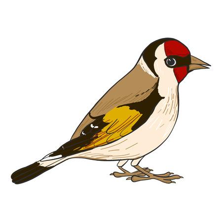Distelvink vogel illustratie.