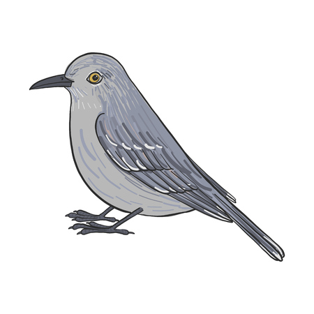 Mockingbird, vector bird, hand drawn songbird, isolated vector elements