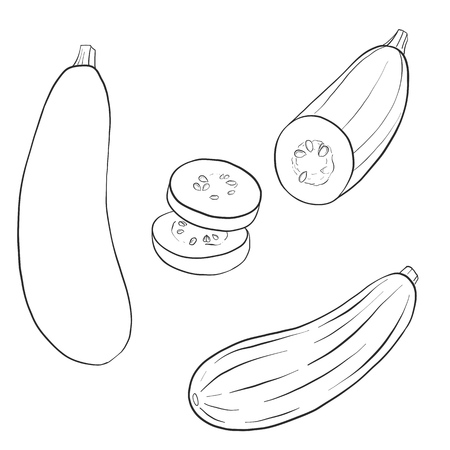 Drawing  of zucchini. Zdjęcie Seryjne - 92121411