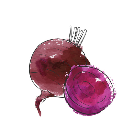 vector drawing beet, isolated vegetables, hand drawn illustration