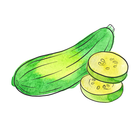Vector drawing zucchini, isolated vegetables, hand drawn illustration
