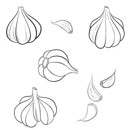 vector drawing garlic Stock Photo - 92208230