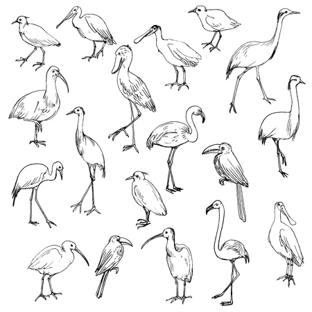 Set of birds, hand drawn cranes flamingos and herons.