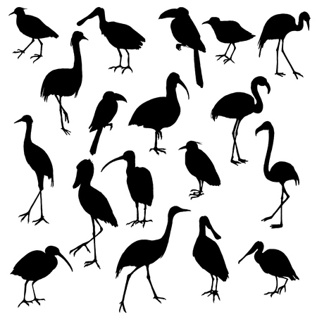 Vector set of birds silhouettes
