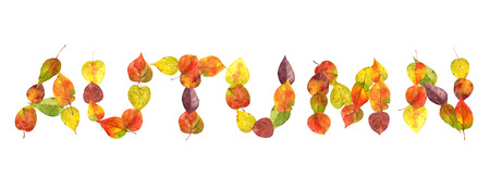 the word autumn from the fallen leaves
