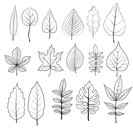 A vector leaves of different trees isolated at white background, hand drawn illustration Illustration