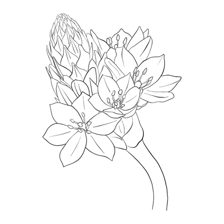 vector drawing flower, isolated floral element, hand drawn botanical illustration