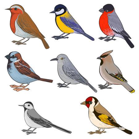 Un conjunto de vectores de aves, pájaros cantores dibujados a mano, elementos vectoriales aislados