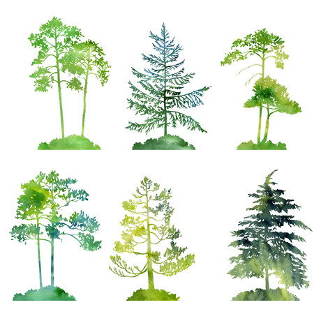 watercolor set of conifer trees