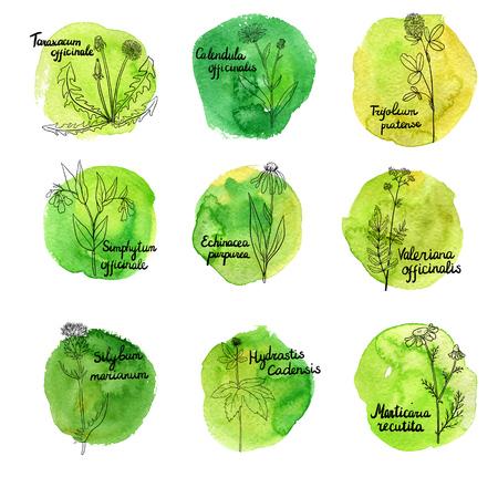 vector set of medical plants Illustration