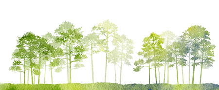 watercolor landscape with pine trees and grass, abstract nature background, coniferous forest template, hand drawn illustration