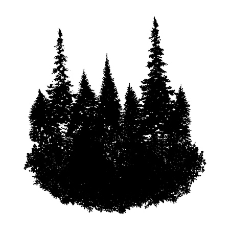 vector landscape with fir trees and grass, abstract nature background, forest template, hand drawn illustration