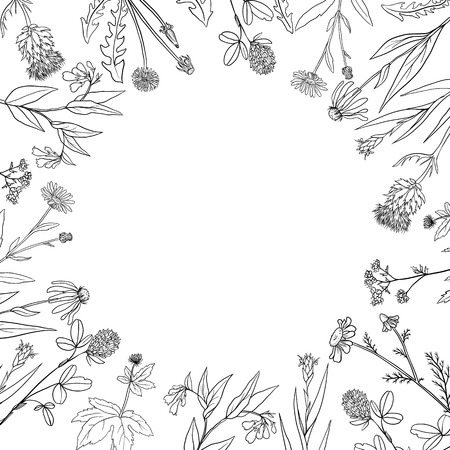Vector round frame with hand drawn medical herbs