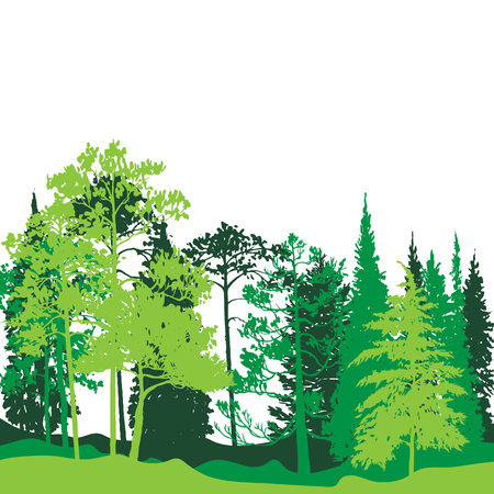 vector landscape with pine and fir trees, abstract nature background, forest template, hand drawn illustration Vectores